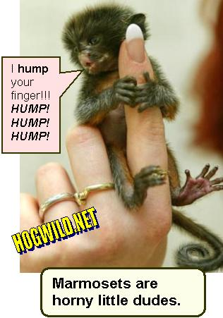 Hogwild dating advice