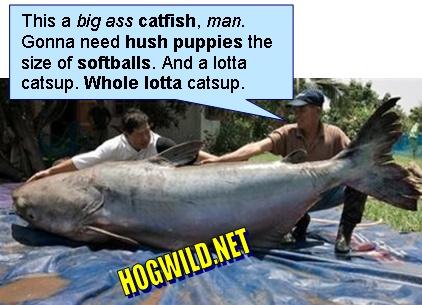 Catfish film  Wikipedia