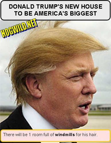 donald trump hair piece. donald trump hair piece