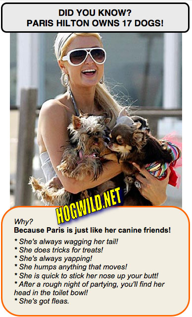 paris hilton dogs